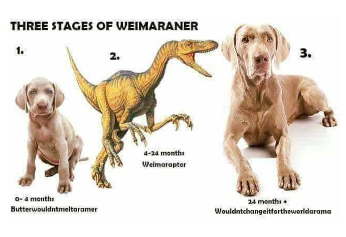 3stages