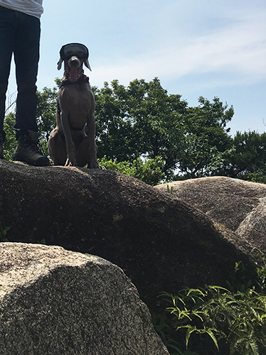 犬と山登り