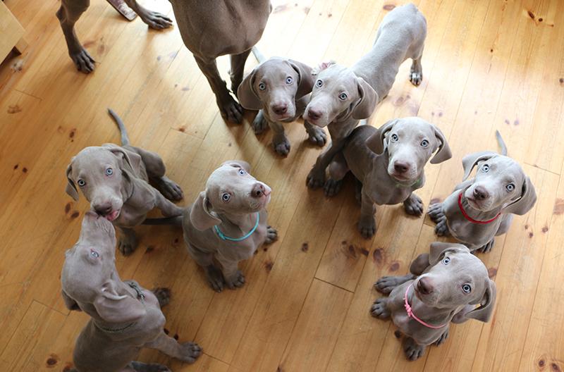 子犬たちの記録写真