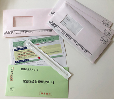 DNA採取ブラシ