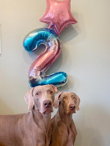 2歳お誕生日の風船